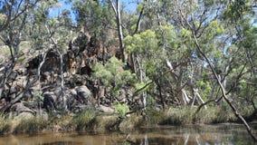 Κόκκινες γόμμες ποταμών, εθνικό πάρκο σειρών Flinders, Αυστραλία Στοκ Εικόνα