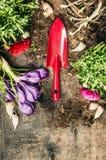 Κόκκινες εγκαταστάσεις λουλουδιών σεσουλών και άνοιξη κηπουρικής στο αγροτικό ξύλινο υπόβαθρο Στοκ φωτογραφίες με δικαίωμα ελεύθερης χρήσης