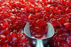 Κόκκινες ζελατινούχες καραμέλες Στοκ εικόνα με δικαίωμα ελεύθερης χρήσης