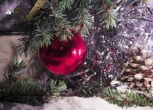 Κόκκινες διακοσμήσεις παιχνιδιών σφαιρών στο δέντρο και τους χιονώδεις κώνους έλατου Στοκ Φωτογραφίες