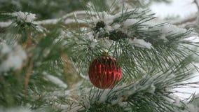 Κόκκινες διακοσμήσεις Χριστουγέννων με τους κλάδους πεύκων Στοκ Εικόνες