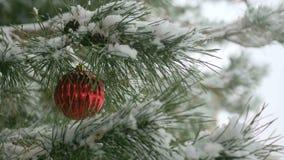 Κόκκινες διακοσμήσεις Χριστουγέννων με τους κλάδους πεύκων Στοκ Φωτογραφίες