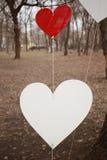 Κόκκινες και άσπρες καρδιές σε ένα δέντρο στο πάρκο στο βαλεντίνο ` s Στοκ Φωτογραφία