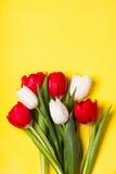 Κόκκινες και άσπρες τουλίπες Στοκ Φωτογραφίες