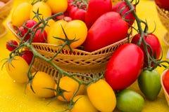 Κόκκινες και κίτρινες ντομάτες Στοκ φωτογραφίες με δικαίωμα ελεύθερης χρήσης