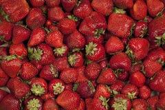 Κόκκινες και ώριμες φράουλες Στοκ Εικόνες