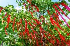 Κόκκινες κορδέλλες σε ένα δέντρο Στοκ Φωτογραφία
