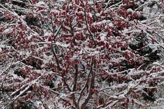 κόκκινες κυματώσεις Στοκ φωτογραφία με δικαίωμα ελεύθερης χρήσης