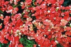Κόκκινες λουλούδι και μύγα στοκ εικόνες