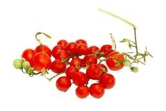 κόκκινες μικρές ντομάτες Στοκ εικόνες με δικαίωμα ελεύθερης χρήσης