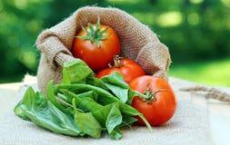 Κόκκινες ντομάτες κερασιών Στοκ εικόνα με δικαίωμα ελεύθερης χρήσης