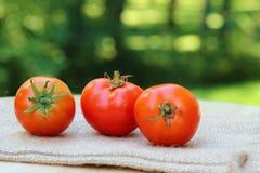 Κόκκινες ντομάτες κερασιών Στοκ Εικόνες