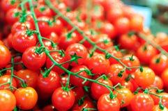 κόκκινες ντομάτες κερα&sigma Στοκ εικόνα με δικαίωμα ελεύθερης χρήσης