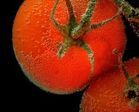 Κόκκινες ντομάτες με την αεροφυσαλίδα σε μια επιφάνεια στο μαύρο υπόβαθρο Στοκ φωτογραφία με δικαίωμα ελεύθερης χρήσης