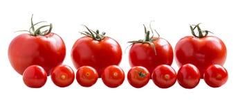 Κόκκινες ντομάτες σε ένα άσπρο υπόβαθρο Στοκ φωτογραφίες με δικαίωμα ελεύθερης χρήσης