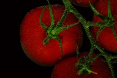 Κόκκινες ντομάτες στο μαύρο υπόβαθρο Στοκ Φωτογραφία