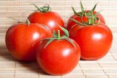 κόκκινες ντομάτες υγρές Στοκ Φωτογραφίες