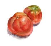 κόκκινες ντομάτες δύο απεικόνιση αποθεμάτων