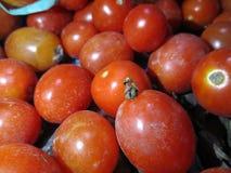 κόκκινες ντομάτες Στοκ εικόνα με δικαίωμα ελεύθερης χρήσης