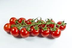 κόκκινες ντομάτες Στοκ εικόνες με δικαίωμα ελεύθερης χρήσης