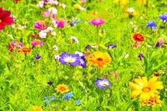 Κόκκινες παπαρούνες, μπλε cornflowers και ζωηρόχρωμα θερινά άγρια λουλούδια στην Ευρώπη Στοκ φωτογραφία με δικαίωμα ελεύθερης χρήσης