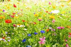 Κόκκινες παπαρούνες, μπλε cornflowers και ζωηρόχρωμα θερινά άγρια λουλούδια στην Ευρώπη Στοκ Φωτογραφίες