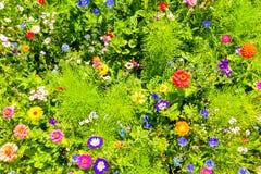 Κόκκινες παπαρούνες, μπλε cornflowers και ζωηρόχρωμα θερινά άγρια λουλούδια στην Ευρώπη Στοκ φωτογραφίες με δικαίωμα ελεύθερης χρήσης