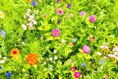 Κόκκινες παπαρούνες, μπλε cornflowers και ζωηρόχρωμα θερινά άγρια λουλούδια στην Ευρώπη Στοκ Εικόνα