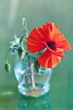 Κόκκινες παπαρούνες Στοκ Φωτογραφίες