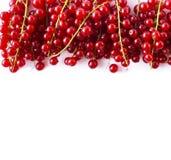 Κόκκινες σταφίδες στα σύνορα της εικόνας με το διάστημα αντιγράφων για το κείμενο Ώριμες κόκκινες σταφίδες στο άσπρο υπόβαθρο Τοπ Στοκ Εικόνες