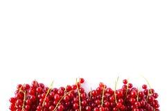 Κόκκινες σταφίδες στα σύνορα της εικόνας με το διάστημα αντιγράφων για το κείμενο Ώριμες κόκκινες σταφίδες στο άσπρο υπόβαθρο Τοπ Στοκ Φωτογραφίες