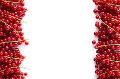 Κόκκινες σταφίδες στα σύνορα της εικόνας με το διάστημα αντιγράφων για το κείμενο Ώριμες κόκκινες σταφίδες στο άσπρο υπόβαθρο Τοπ Στοκ Εικόνα