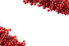 Κόκκινες σταφίδες στα σύνορα της εικόνας με το διάστημα αντιγράφων για το κείμενο Ώριμες κόκκινες σταφίδες στο άσπρο υπόβαθρο Τοπ Στοκ Φωτογραφία