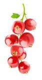 Κόκκινες σταφίδες Στοκ εικόνες με δικαίωμα ελεύθερης χρήσης