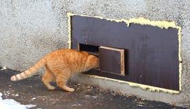Κόκκινες συμπιέσεις γατών σε μια στενή τρύπα γατών στο παράθυρο υπογείων στοκ φωτογραφία