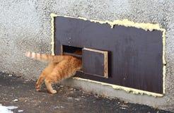 Κόκκινες συμπιέσεις γατών σε μια στενή τρύπα γατών στο παράθυρο υπογείων στοκ φωτογραφίες