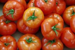 Κόκκινες σωματώδεις ντομάτες με τους μίσχους Στοκ Φωτογραφία