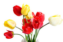 κόκκινες τουλίπες κίτρινες στοκ εικόνα με δικαίωμα ελεύθερης χρήσης