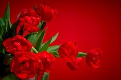 Κόκκινες τουλίπες σε ένα χρωματισμένο υπόβαθρο Στοκ εικόνα με δικαίωμα ελεύθερης χρήσης