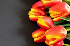 Κόκκινες τουλίπες στο μαύρο υπόβαθρο Επίπεδος βάλτε, τοπ άποψη Υπόβαθρο ημέρας γυναικών στοκ εικόνα