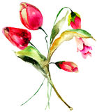 κόκκινες τουλίπες λουλουδιών Στοκ φωτογραφία με δικαίωμα ελεύθερης χρήσης