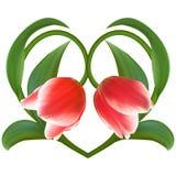 Κόκκινες τουλίπες στη Floral καρδιά για την ημέρα βαλεντίνων Σύμβολο αγάπης στο ROM Στοκ Εικόνες