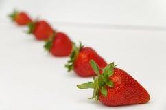Κόκκινες φράουλες με τους πράσινους μίσχους Στοκ Εικόνες