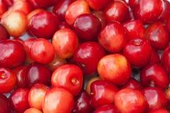 Κόκκινες φρέσκες φράουλες στη φύση στοκ εικόνες