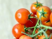 Κόκκινες ώριμες ντομάτες κερασιών Στοκ Εικόνες