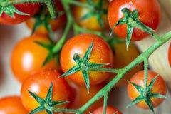 Κόκκινες ώριμες ντομάτες κερασιών Στοκ εικόνες με δικαίωμα ελεύθερης χρήσης