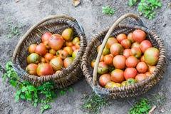 Κόκκινες, ώριμες ντομάτες σε δύο ψάθινα καλάθια Στοκ Φωτογραφίες