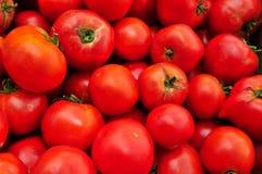 κόκκινες ώριμες ντομάτες Στοκ εικόνα με δικαίωμα ελεύθερης χρήσης