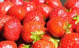 Κόκκινες juicy φράουλες Στοκ Φωτογραφίες