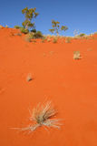 κόκκινη άμμος αμμόλοφων ερή Στοκ φωτογραφία με δικαίωμα ελεύθερης χρήσης